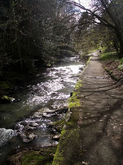A scene from the Lade Braes Walk near Kinness Burn