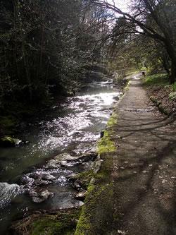 A scene from the Lade Braes Walk near Kinness Burn